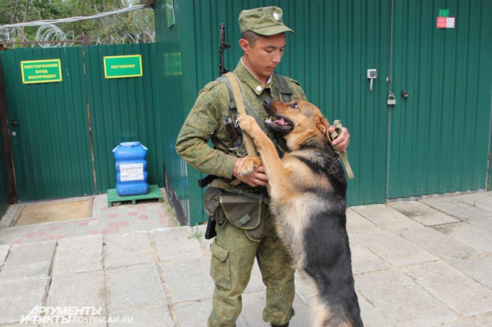 Немецкая овчарка Сара уже задержала нескольких нарушителей. В основном незаконно переходят границу контрабандисты и люди, у которых не всё в порядке с законом или документами.