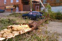 Деревья со скрипом рухнули на землю