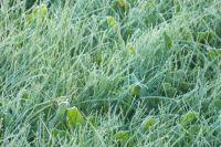 Внешним проявлением заморозка является образование инея на почве и растениях.