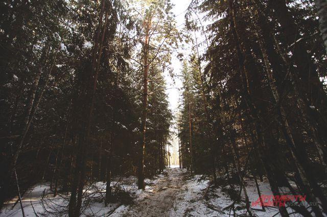 В Заельцовском парке сносят самострои