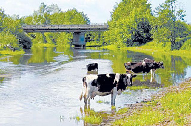 Самые ценные для выпасов земли - возле реки Урень.