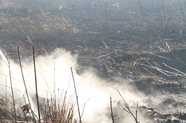 Калининградцы жалуются на едкий дым от тлеющего короотвала.