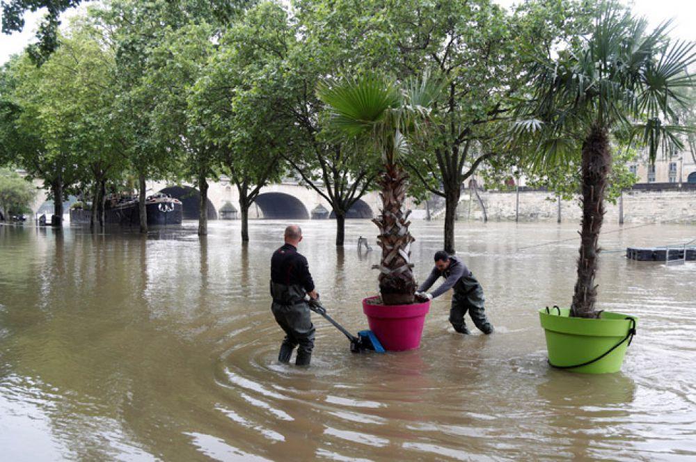 Рабочие перевозят пальмы на набережной.