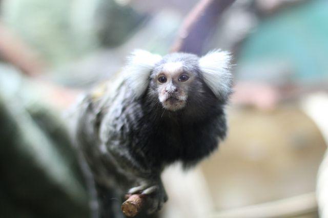 За жизнью обитателей Тропического дома теперь можно наблюдать практически круглосуточно.