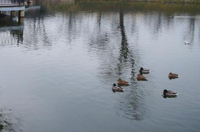 В мэрии объяснили, почему снизился уровень воды на Нижнем озере.