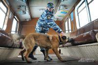 Тренировка в «вагоне метро»: пакетик с имитатором взрывчатки обнаружен за сиденьем.
