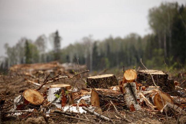 На Сумщині виявили незаконну схему експорту лісу