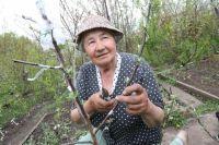 Собрать урожай в Сибири - дело непростое