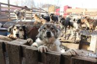 В частных приютах денег на корм животным не хватает