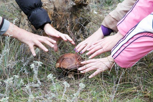 В этом сезоне грибов хватит на всех!