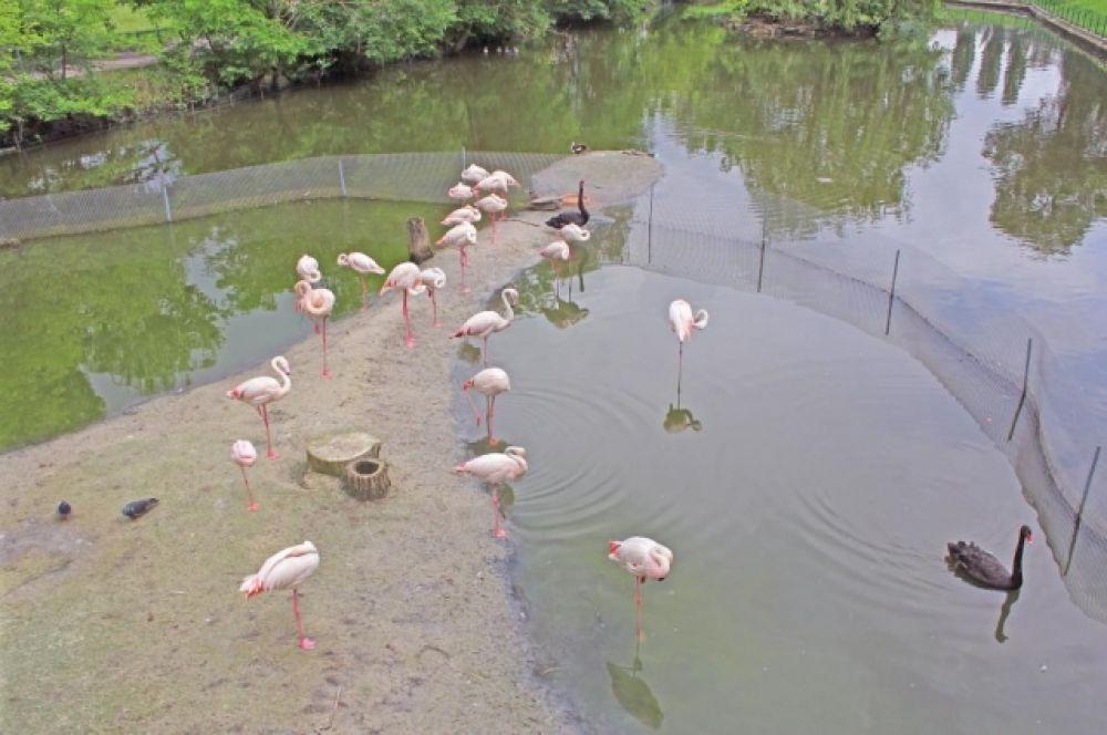 В зоопарке содержатся свыше 5000 животных, относящихся к более 400 видам, причём из них 105  видoв внeceны в Международную Kpacнyю книгy, 39 видов — в Kpacнyю книry Pоссии, 28 видов - в Красную книгу Ростовской области, а 132 видa внeceны в cпиcки приложений конвенции CITES.
