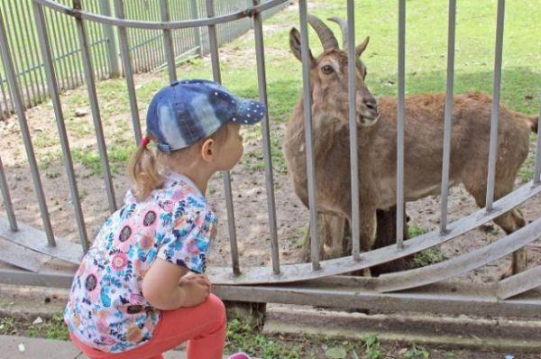 В зоопарке донской столицы начался 89-й, предъюбилейный, летний сезон.