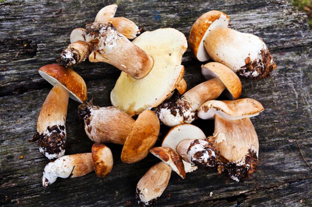 Ранние белые грибы и подосиновики. Не всегда первые белые и подосиновики появляются в июне. Но сейчас благоприятные обстоятельства: довольно тепло и много влаги. Так что есть смысл заглянуть в лес.