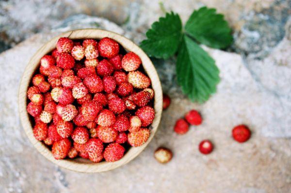 Земляника. В конце июня в средней полосе России поспевает самая ароматная дикая ягода – лесная земляника. Она сладкая, пахучая, необычайно вкусная.