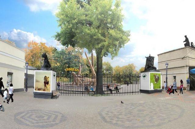 В конце июня в зоопарк Калининграда переедут два орангутана.