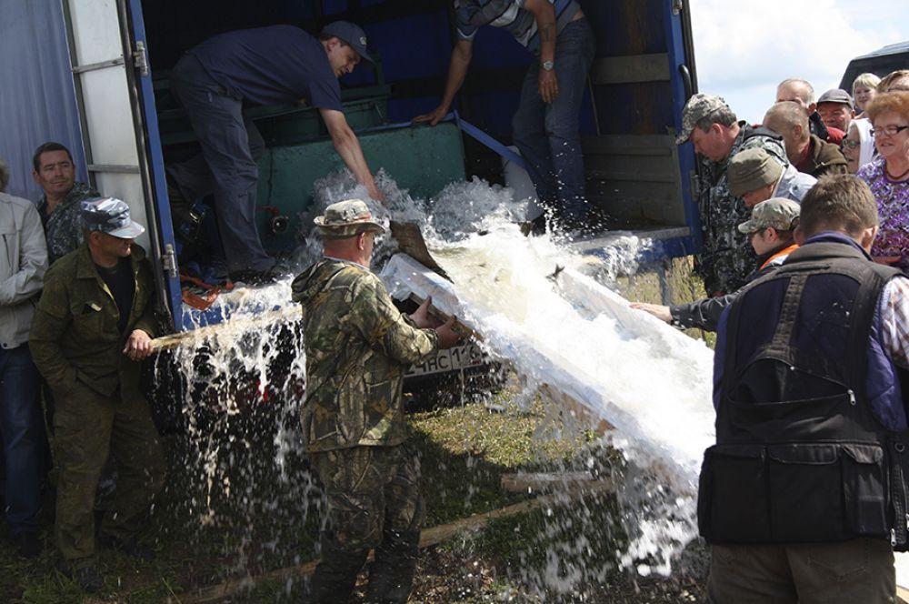 Чтобы попасть в Арбажское водохранилище, мальки преодолели 1000 километров из Татарстана. К счастью, не вплавь, а на машине.