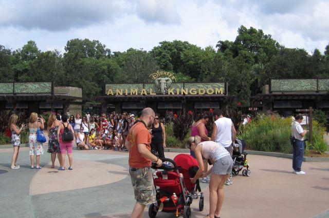 Walt Disney World Resort в Орландо, парк «Королевство животных»