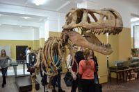 Главное кузбасское сокровище последних лет - останки динозавров.