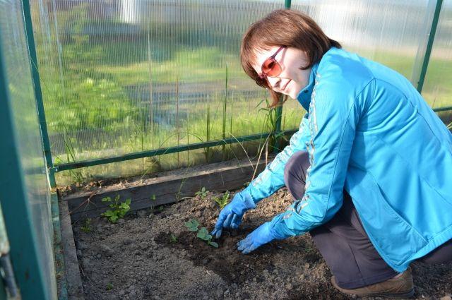 В этом году Альфия Шамсутдинова в третий раз пробует вырастить арбузы. И впервые - дыни.