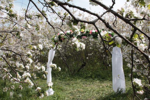 В вишневом саду можно сыграть красивую свадьбу.