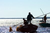 Ягоды, грибы, рыба, морские водоросли - всё это испокон веков кормило Архангельскую область. На фото - добыча водорослей.