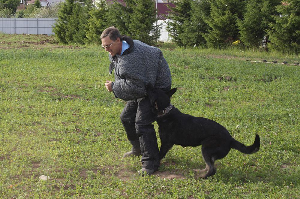 Уроки дрессуры проходят и днём, и ночью, в разной местности, чтобы собака могла отправиться на задание в любое время суток.
