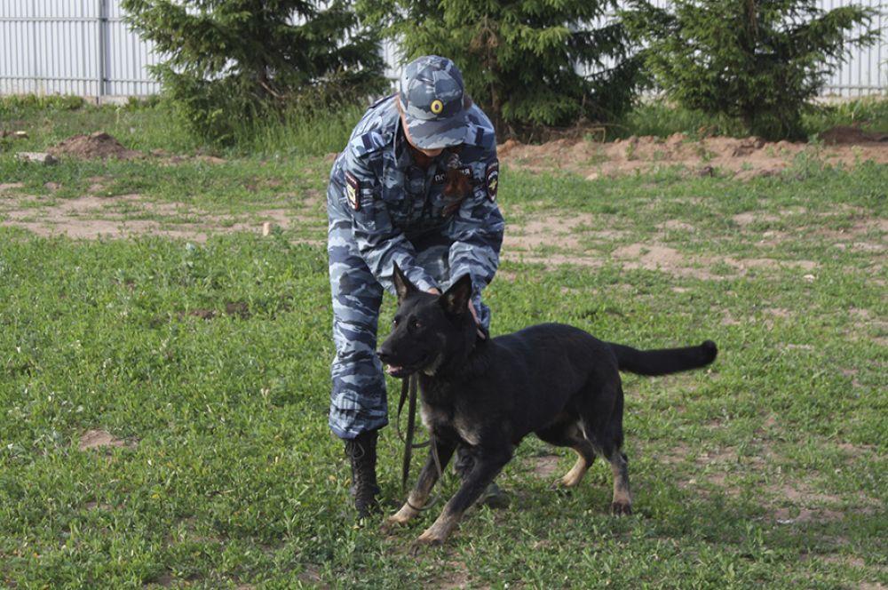 По выходу на пенсию собаку передают тому сотруднику, к которому она была прикреплена.
