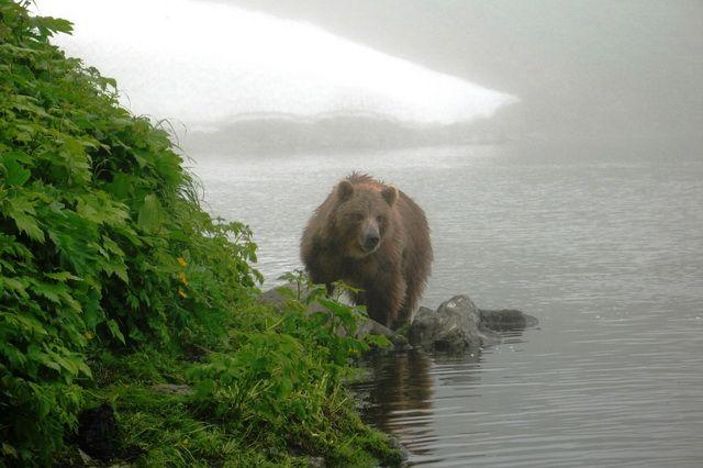 Медведь может появиться практически в любом месте.