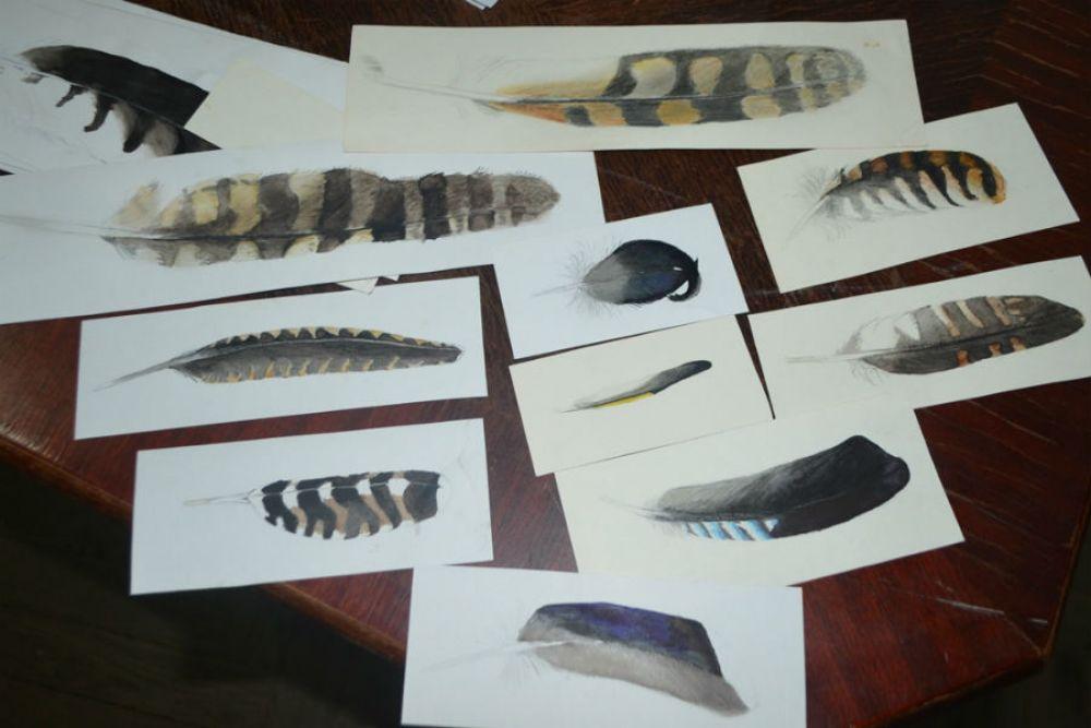Затем перья рисовались на ватмане.