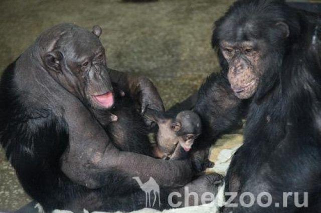 Сонни и Бонни с малышом.