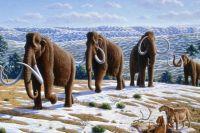 До XX века публика видела мамонтов только на картинках.