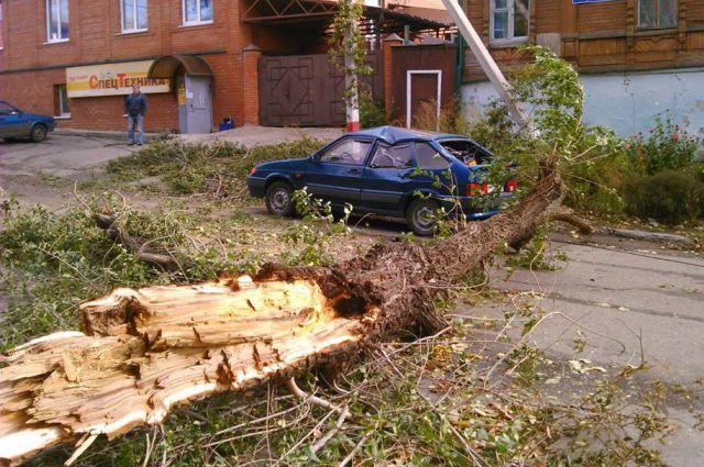 Дерево упало на машину