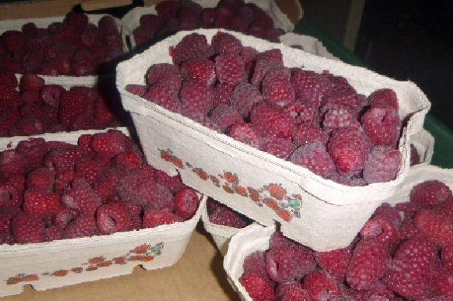 В Калининграде уничтожили 10 тонн санкционных овощей и фруктов.