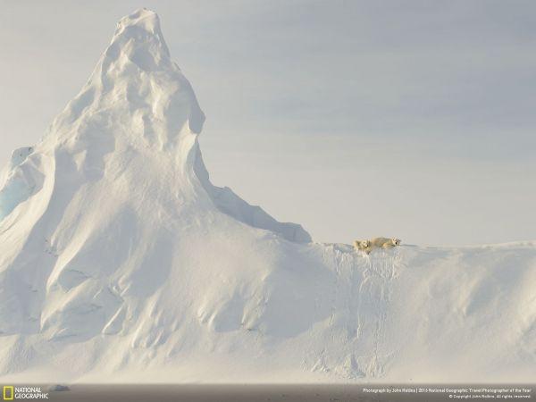 Медведи на айсберге от John Rollins были сняты в Канаде и получили свой похвальный отзыв