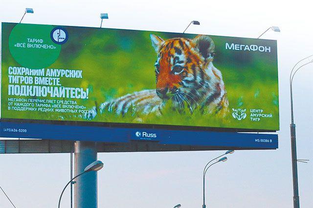 «Мегафон» вошёл в число партнеров и друзей тигров и леопардов. Фото предоставлено центром «Амурский тигр».