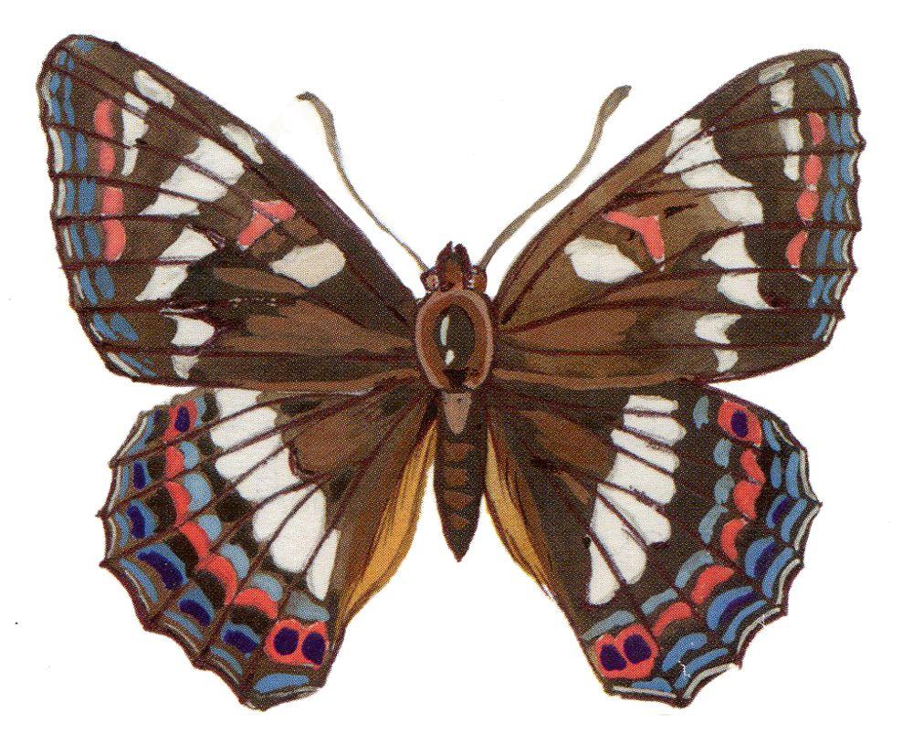Тополевый ленточник в Татарстане встречается очень редко, но не охраняется. Бабочку может спасти только запрет на отлов. Занесена в Красную книгу Мордовии, Смоленской и Челябинской областей.