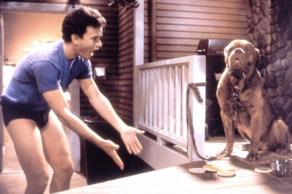 Немалый успех выпал и на долю фильма «Тёрнер и Хуч» (1989), где его партнёром выступил пёс.