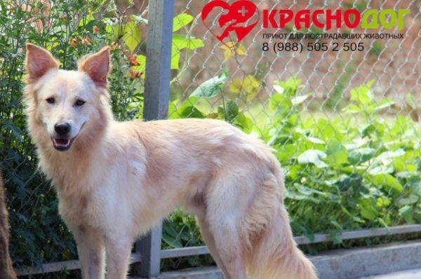 Платон - роскошный блондин с очень благородными чертами. Ему всего 1,3 года. Уравновешен и неагрессивен, не любит суету.