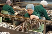 Хватит ли переработчикам качественной рыбы?