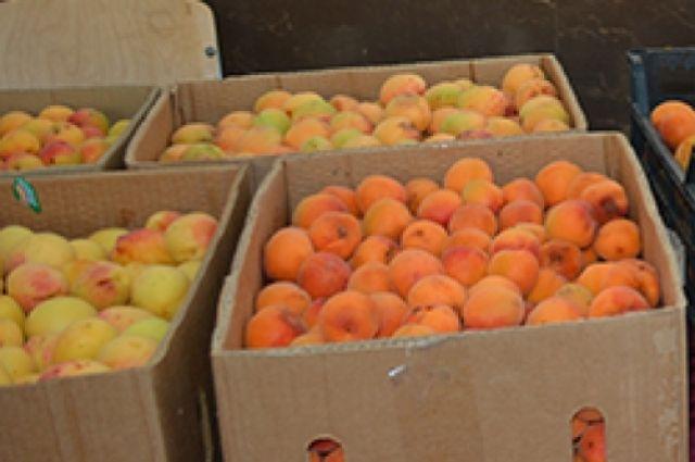 Калининградец съел и потерял 6 кг украденных абрикосов, скрываясь от погони