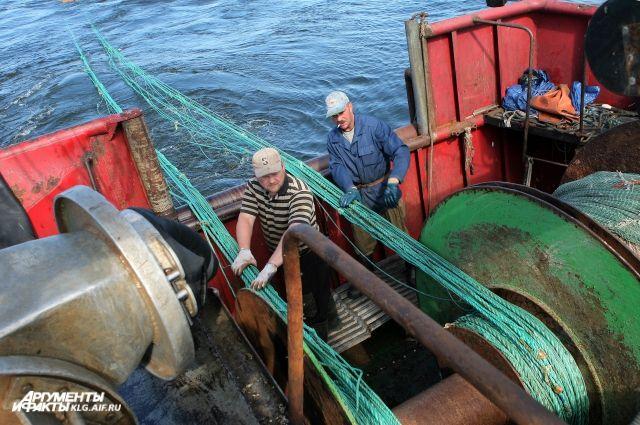 Калининградские рыбаки выловили рекордное за 70 лет количество кильки.