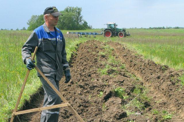 Польский инвестор арендовал в Багратионовском районе 3,5 га земли.