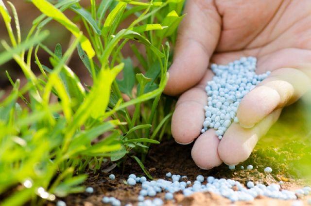 Каких минералов не хватает растениям в почве.
