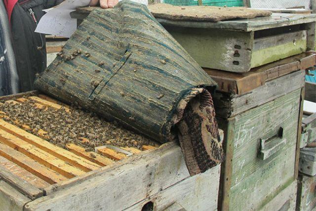 Злоумышленник перекладывал мёд в банки и выносил его с предприятия.