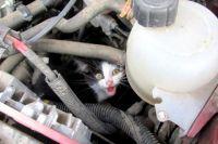 Вот такой сюрприз обнаружил под капотом своего авто смолянин Максим Зыков.