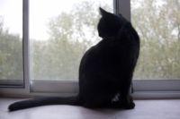 Москитная сетка может защитить не только людей от комаров но и кошек - от падения.