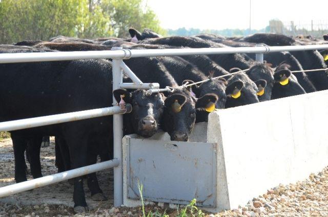 Ферма «Андреевка» стала первой из восьми запланированных на территории области.