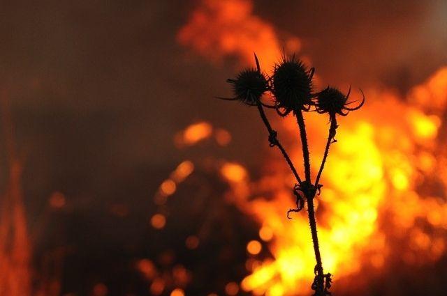 Навоенном полигоне вЧерниговской области вспыхнул пожар