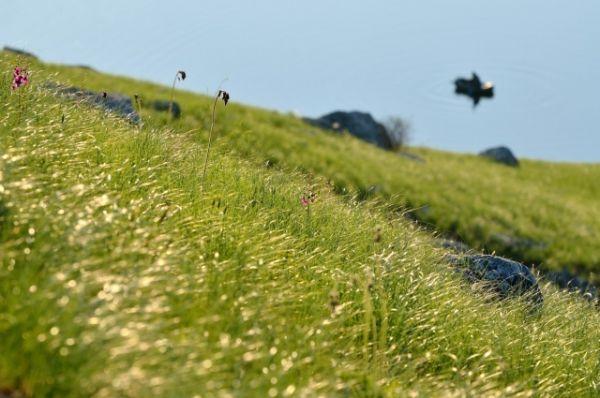 Трава сверкает на солнце.
