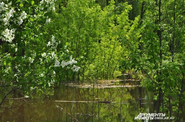 Вода в этом году поднялась необычайно высоко.